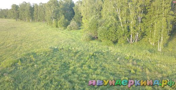 Лес с высоты квадрокоптера!